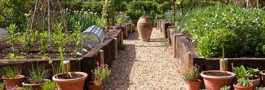 How To Start A Kitchen Garden By